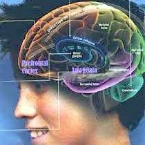 Creier adolescent