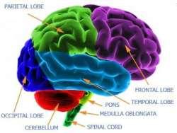 Plansa creier