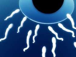 Ovul si spermatozoizi