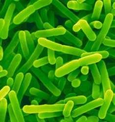 Infectie in sarcina
